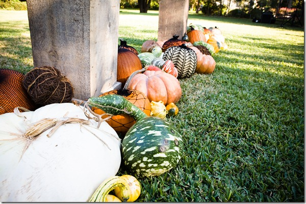 Pumpkin Decor, Dallas Wedding, Dallas Wedding Planner, Fall Wedding